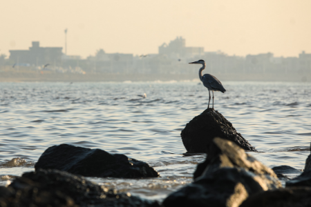 Bird on a rock looking out over the water